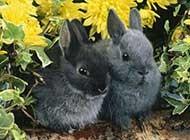 可爱的兔子唯美图片