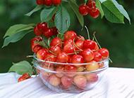 鲜美的樱桃唯美高清图片
