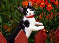 小猫咪可爱萌宠图片