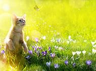 大自然春季主题高清风景图片