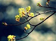 绿色的嫩芽高清植物壁纸
