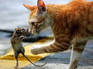 最新版的猫和老鼠搞笑动物图片