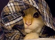 """超萌猫咪高级""""隐身术""""搞笑图片"""