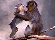 猿猴猩猩等灵长类动物合集