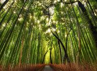 阳光下的高清唯美树林图片