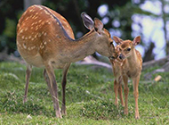 高清动物图片合集展野性魅力