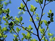 唯美春天绿色风景图片壁纸