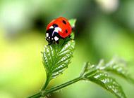 绿色护眼植物动物壁纸大全