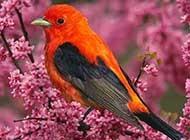自然界五颜六色的可爱小鸟图片