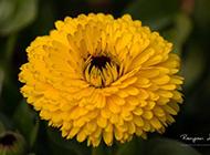 春天花园植物动物特写高清图片