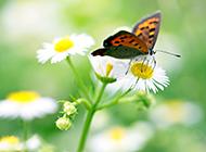 精选绿色植物和蝴蝶高清图片