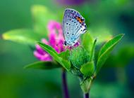 高清蝴蝶壁纸风景明媚迷人