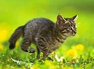 精选可爱猫咪运动瞬间