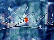 纯洁的记忆如画自然风光壁纸