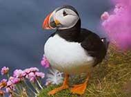 善知鸟自然界可爱鹦鹉鸟类美图
