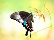 花丛中美丽的蝴蝶图片