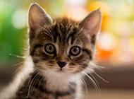 猫咪的幸福时光意境图片