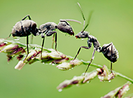 昆虫蚂蚁高清微距摄影图片