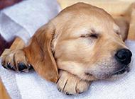 短腿萌宠小狗高清动物图片