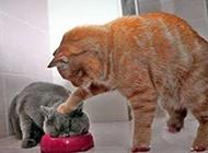 动物搞笑图片之可怜天下父母心