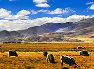 梦幻无边的高原牧场摄影