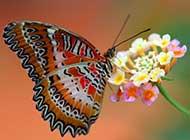 高清非主流蝴蝶