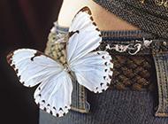 蝴蝶恋上美丽的花儿高清壁纸