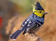 羽毛斑斓的小翠鸟图片