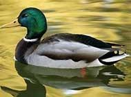 自然特写唯美动物