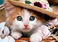 超萌戴帽子猫猫高清可爱图片