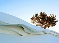 冬日雪景壁纸洁白迷人