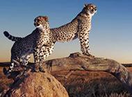 野生动物壁纸高清宽屏精选