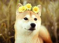 可爱小狗精美个性呆萌选图