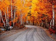 秋天树林风景唯美浪漫