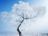 雪中的树冷色风景高清唯美摄影