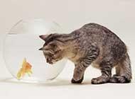 小猫咪与鱼写真桌面高清壁纸