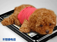 超搞笑可爱宠物小狗文字图集