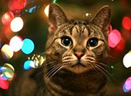 高冷的猫咪高清壁纸