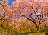 大自然四季优美风景图片壁纸