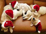 萌态十足的狗狗高清图片