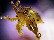 十大海洋怪物特写 深海的秘密