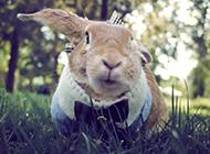 顽皮呆萌的可爱小兔子壁纸