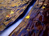 溪流边的落叶高清壁纸