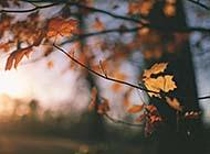 秋日唯美风景高清美图集