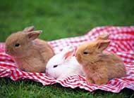 活泼调皮的兔子高清晰组图