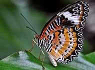 网友提供:多彩蝴蝶唯美高清图片