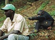 调戏阿三的猴子网络搞笑图集