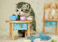 超可爱茶杯小猫咪卖萌美图
