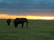 夕阳下:肯尼亚的美景