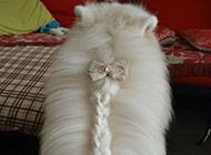 爆笑动物集锦之长辫子的狗狗